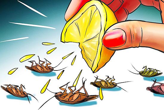 lemon-keeps-away-cockroaches