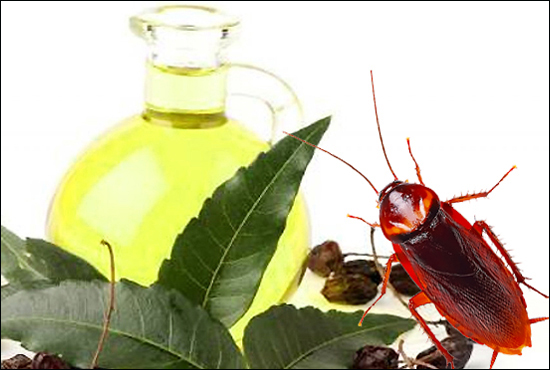 neem-oil-kills-cockroaches